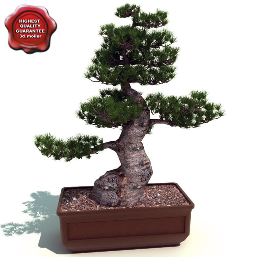 Bonsai tree royalty-free 3d model - Preview no. 1
