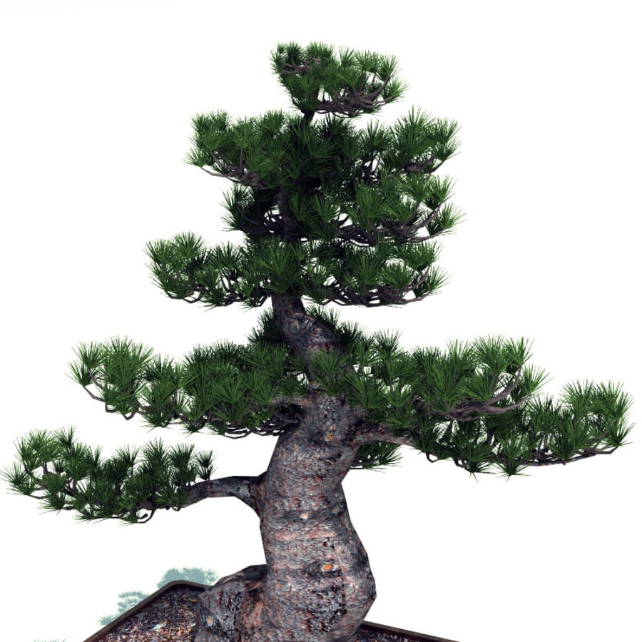 Bonsai tree royalty-free 3d model - Preview no. 3