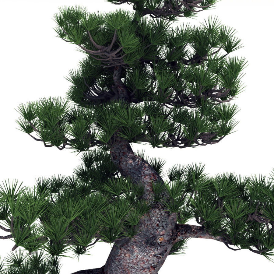 Bonsai tree royalty-free 3d model - Preview no. 4