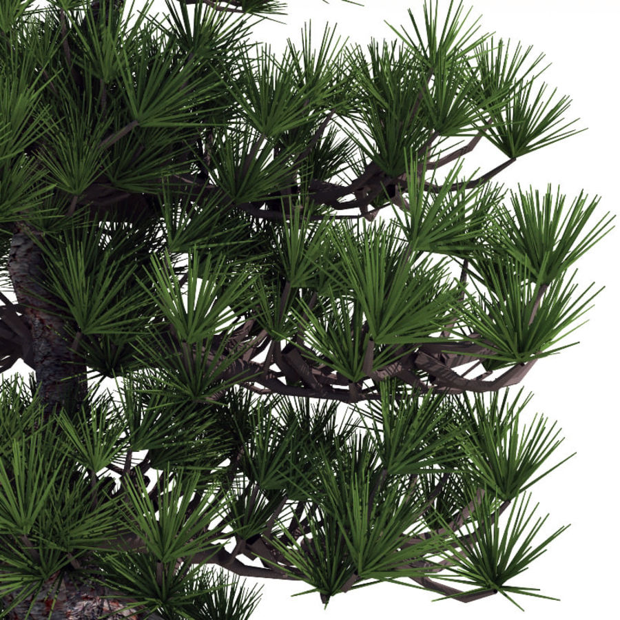 Bonsai tree royalty-free 3d model - Preview no. 5