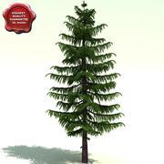 Pseudotsuga Menziesii (Douglas fir) 3d model