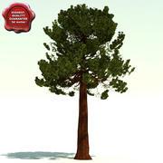 Sequoiadendron Giganteum (Giant Sequoia) 3d model