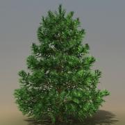 Pinus Hi2 3ds 3d model