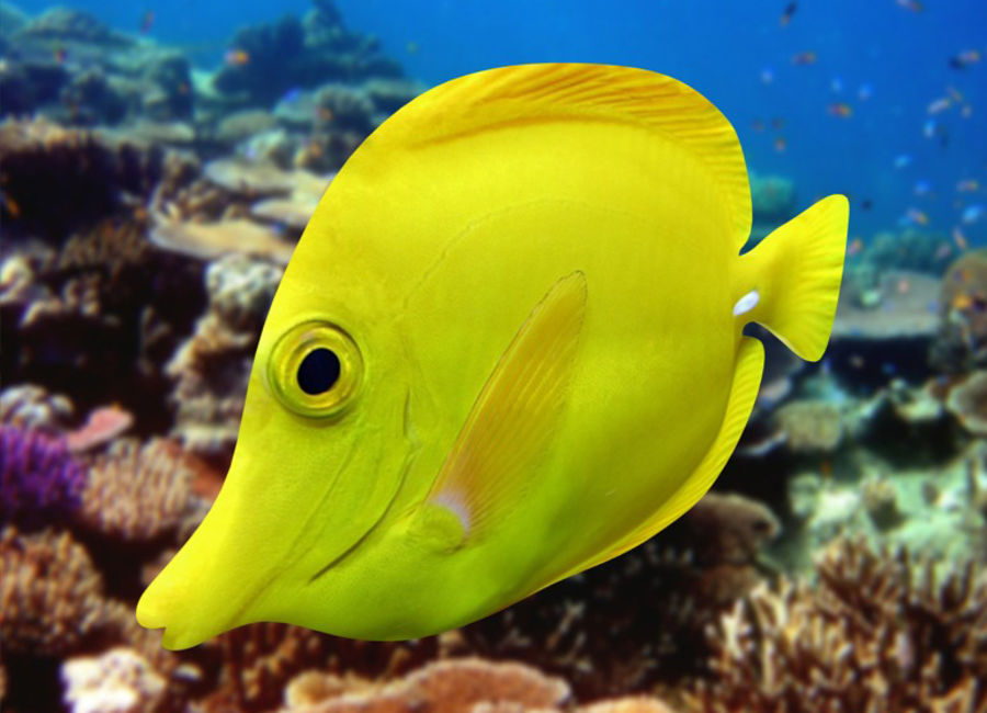 Fish_01 royalty-free 3d model - Preview no. 2