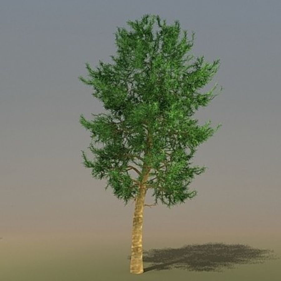 Pinus Hi5 3ds royalty-free 3d model - Preview no. 1