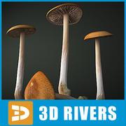 Grisette mushroom by 3DRivers 3d model
