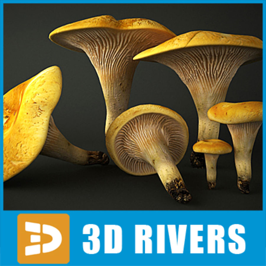 Pfifferling 02 von 3DRivers royalty-free 3d model - Preview no. 1