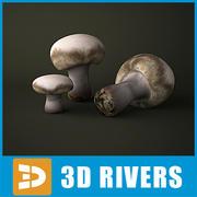 Cogumelo de botão por 3DRivers 3d model
