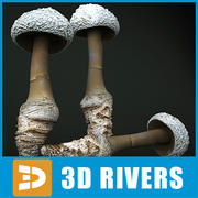 Cokers Amanita par 3DRivers 3d model