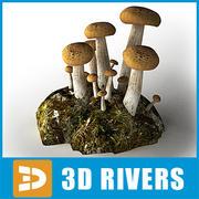 Beech Mushroom by 3DRivers 3d model
