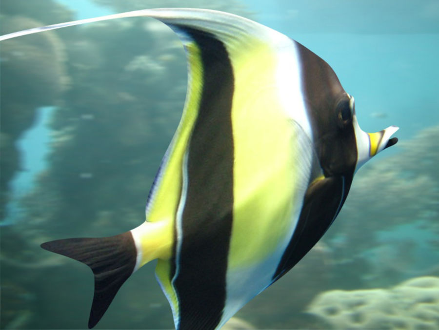 Fish_02 royalty-free 3d model - Preview no. 3