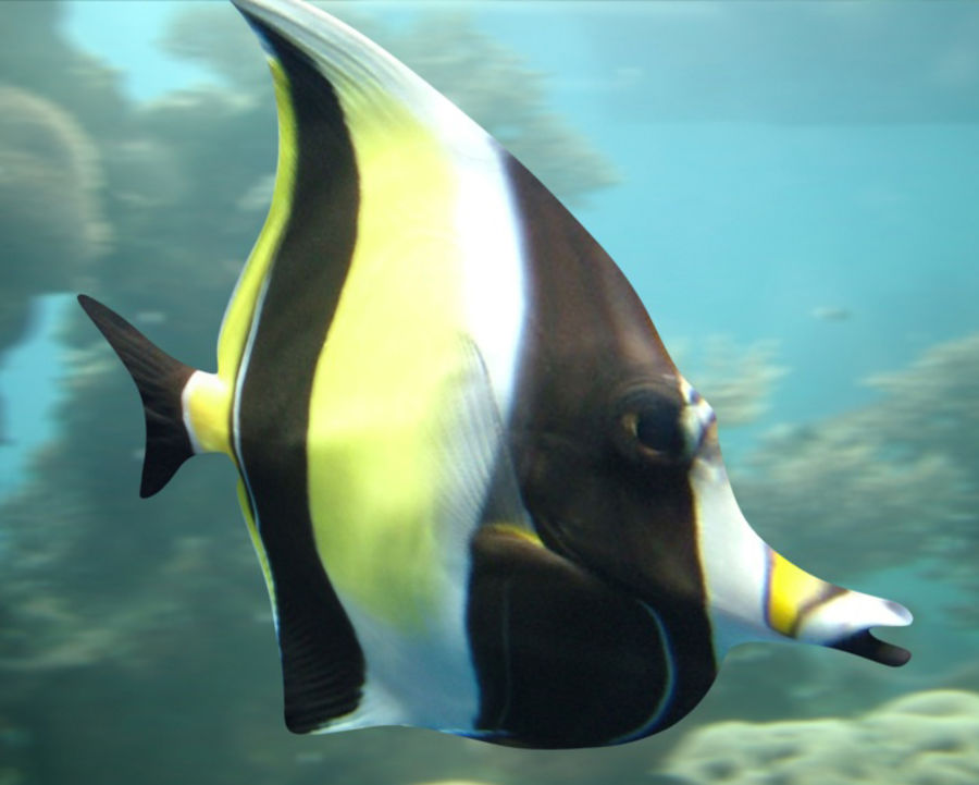 Fish_02 royalty-free 3d model - Preview no. 2