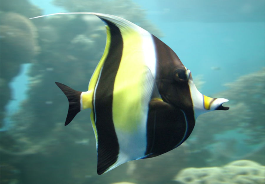 Fish_02 royalty-free 3d model - Preview no. 1