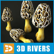 White Morel par 3DRivers 3d model
