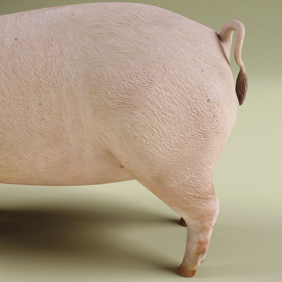 Pig royalty-free 3d model - Preview no. 6