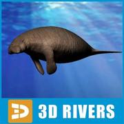 Stellers sea cow by 3Divers 3d model