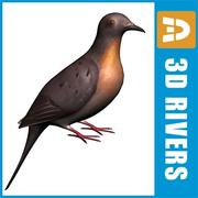 Passenger pigeon by 3DRivers 3d model