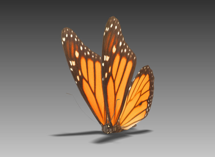 Motyl royalty-free 3d model - Preview no. 2
