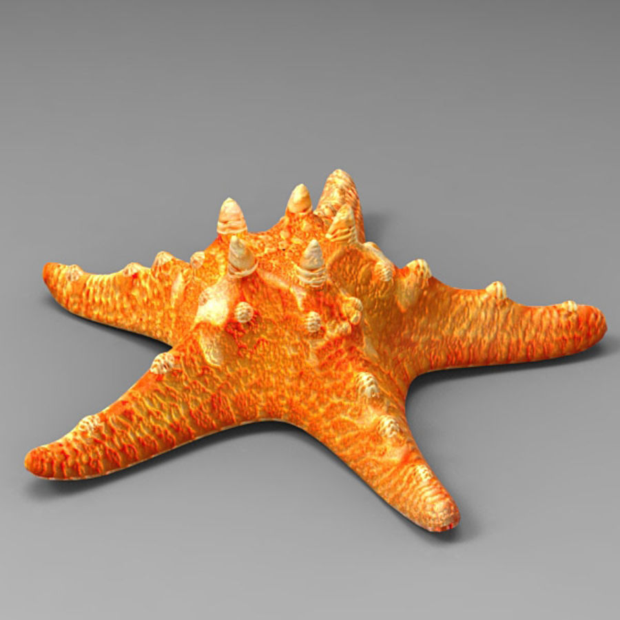 Starfish 2 royalty-free 3d model - Preview no. 3