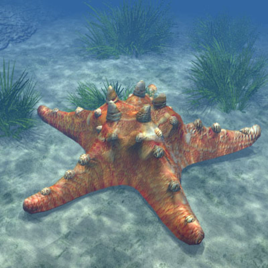 Starfish 2 royalty-free 3d model - Preview no. 5