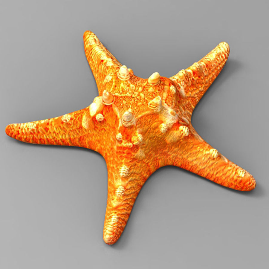 Starfish 2 royalty-free 3d model - Preview no. 1