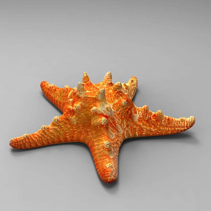 Starfish 2 royalty-free 3d model - Preview no. 2