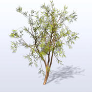 Willow_1.mb 3d model