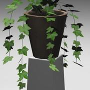Lierre commun plante en pot 3d model