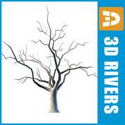 3DRivers의 알몸의 나무 3d model