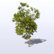Willow_2.mb 3d model