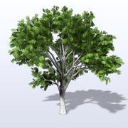 White_Oak_3.mb 3d model