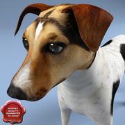 Jack Russel Terrier 3d model