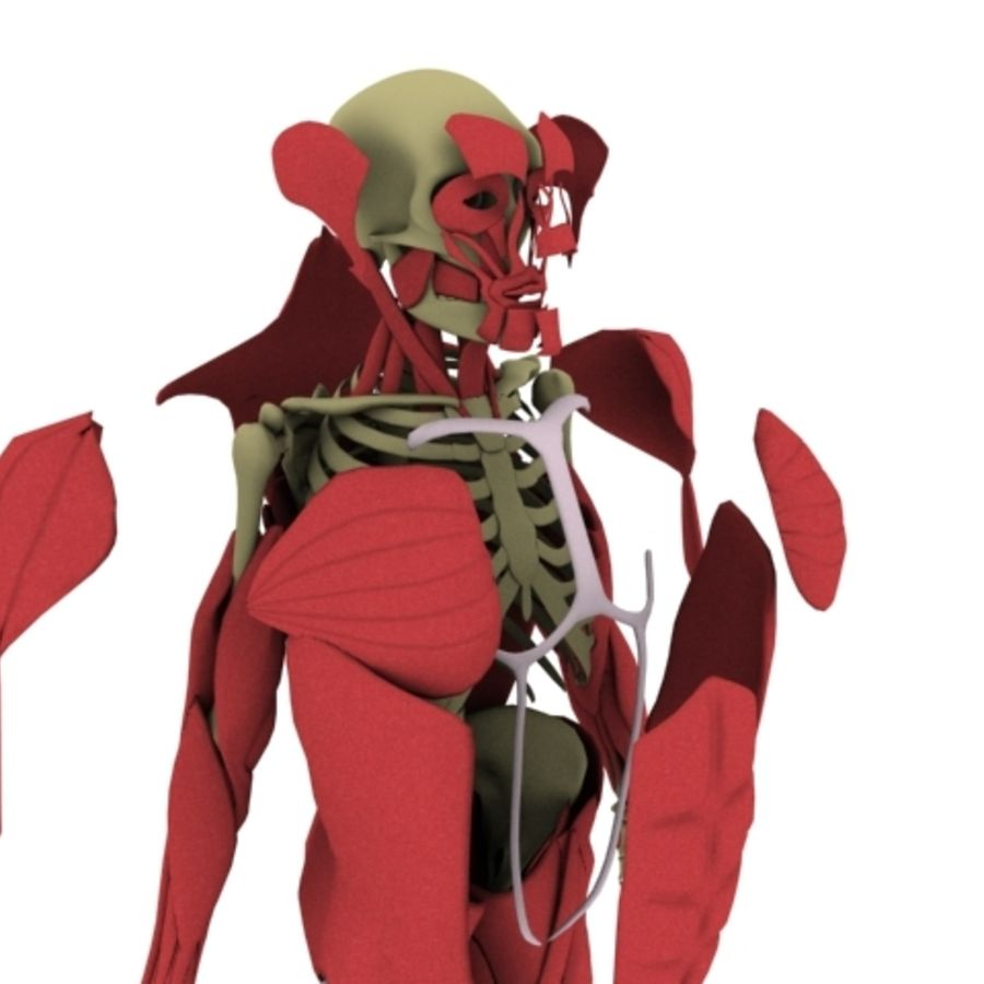 Human Anatomy royalty-free 3d model - Preview no. 6
