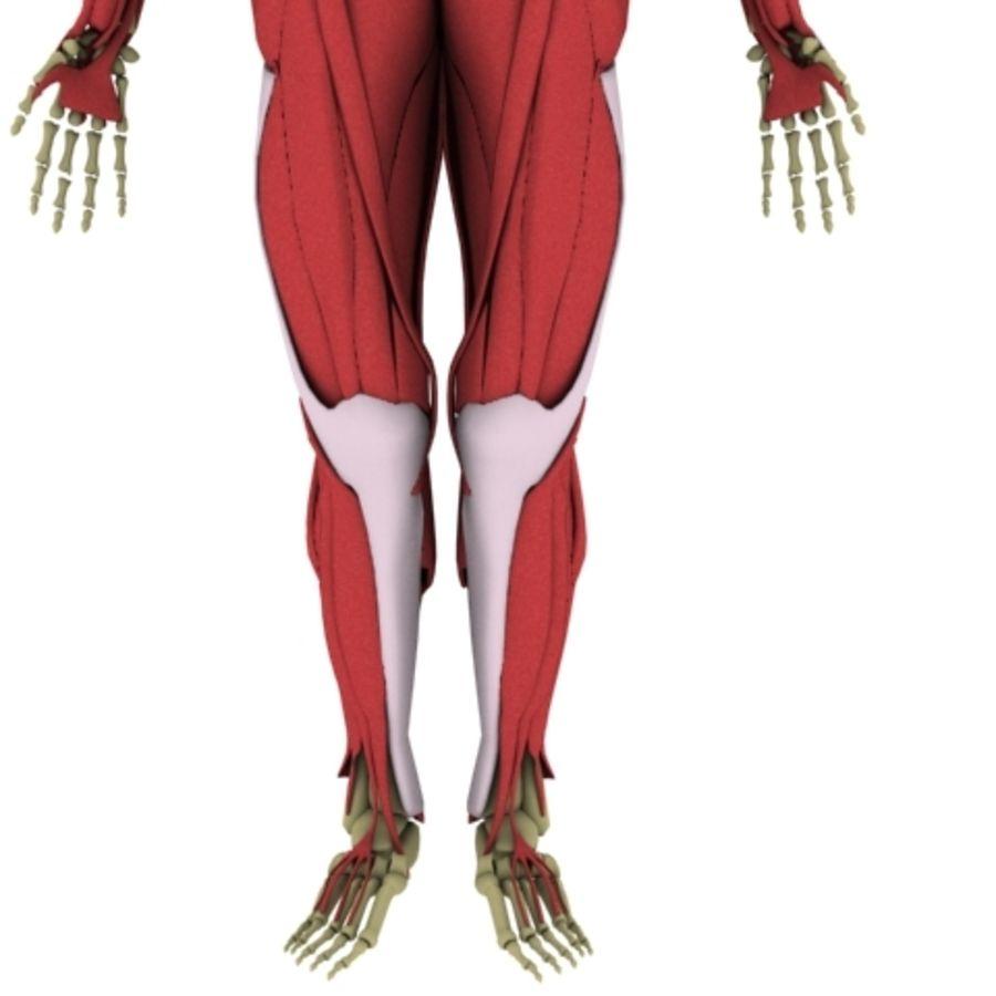Free 3d human anatomy