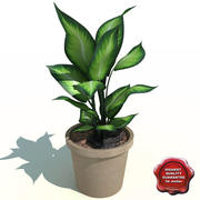 Dieffenbachia picta Camila 3d model