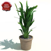 Areca Palm (Butterfly Palm) 3d model