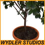Roślina doniczkowa2 3d model