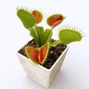 Venus Flytrap by 3DRivers 3d model