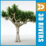 Dracaena draco by 3DRivers 3d model