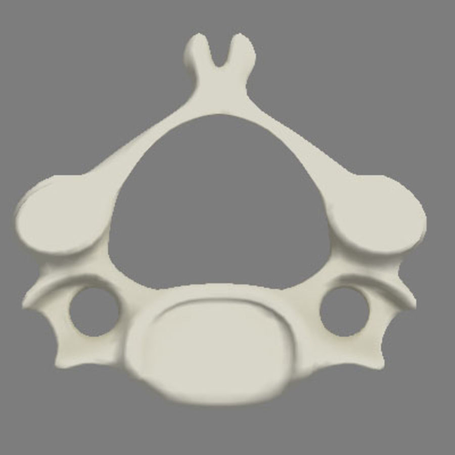 vertebra cervical royalty-free 3d model - Preview no. 4