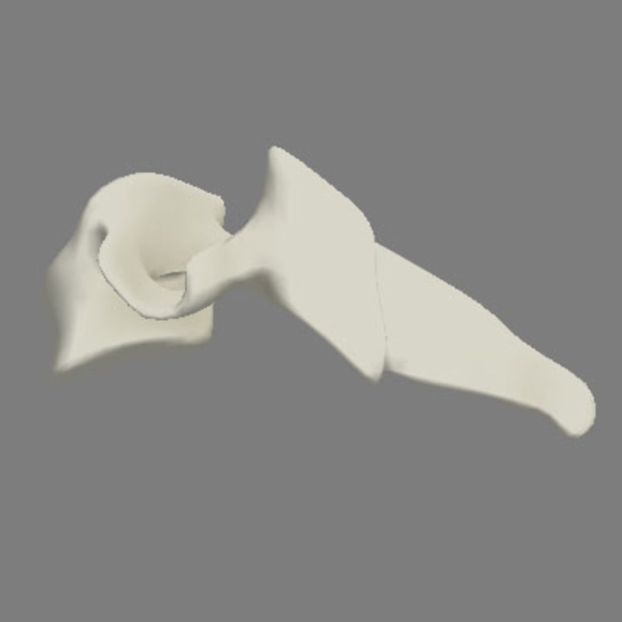 vertebra cervical royalty-free 3d model - Preview no. 5