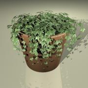 Ivy Plant_max 3d model