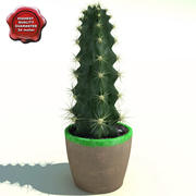 Kaktüs Cereus peruvianus 3d model