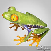 Redeye TreeFrog 3d model
