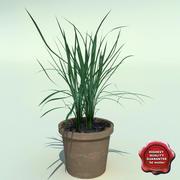 Ophiopogon japonicus 3d model
