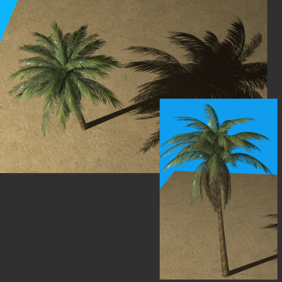 Palmtree Single royalty-free 3d model - Preview no. 1