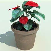 Anthurium andreanum 3d model