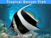 Tropikal balık 3d model
