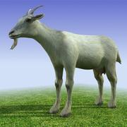 Low poly 3d model Goat 3d model
