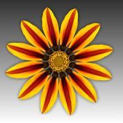 Kwiat 3d model